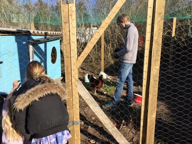 Hønsepræsident Robert viser de nye høns frem