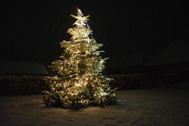 Juletræ på Anholt